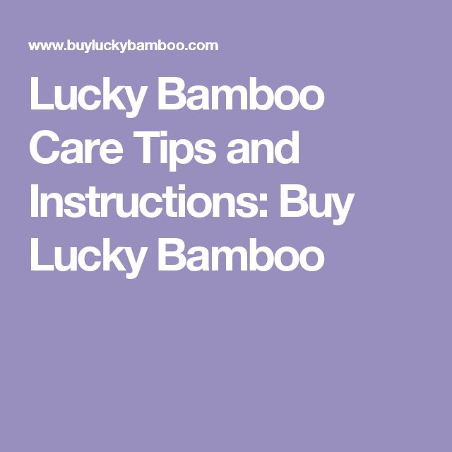 Lucky Bamboo Care Tips and Instructions: Buy Lucky Bamboo