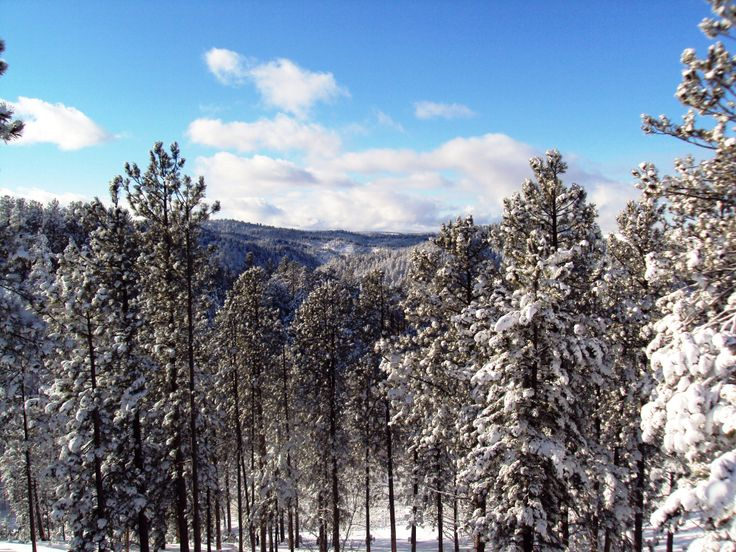 1000 images about cabin on the ridge black hills south for Cabine black hills south dakota