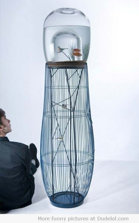 this is the weirdest idea ever! a fish tank and a bird cage combined?!?
