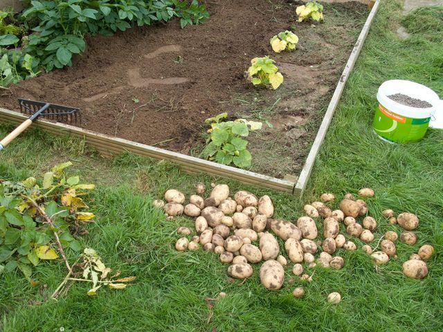 Quels sont les légumes les plus faciles à cultiver pour un jardinier débutant ? Semis, culture et récolte : nos conseils pour commencer votre potager.