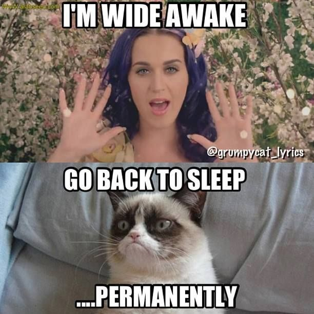 I Am Wide Awake Go Back To Sleep Permanently Funny Grumpy Cat Meme Image