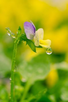 5061c92c99714b873cab28aadda56275--morning-dew-nature-dew-drops.jpg (236×356)