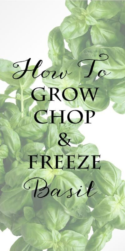 Basil: How to Grow, Chop & Freeze | Simple tips for growing and harvesting basil. Includes how to chiffonade or chop basil for cooking and preserving. Step by step directions for freezing basil are also included. Keep this amazing herb at your fingertips year-round! #Sponsored