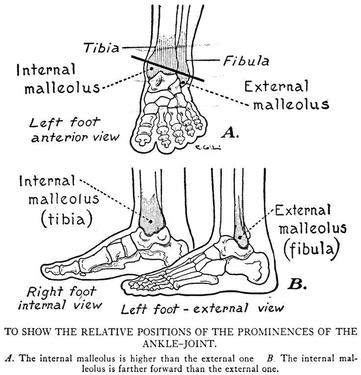 Foot Bones Diagram Feet Pinterest