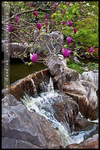Китайский Сад Дружбы, Chinese Garden of Friendship, Сидней, Sydney, Новый Южный Уэльс, NSW, Австралия, Australia