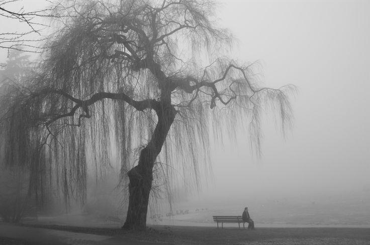 General 4592x3056 mist people trees bench monochrome