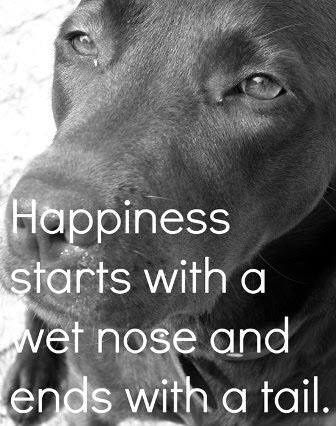 Happiness starts with a wet nose and ends with a tail. #dogs #love #labs