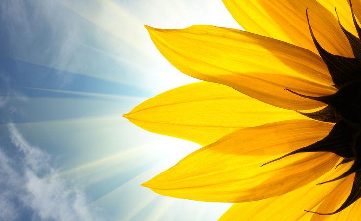 Are Sunflower Seeds Good Keto Foods