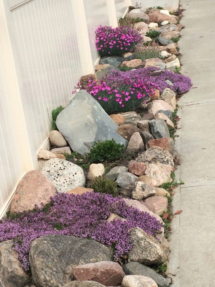 rock garden and creeping flowering thyme .... so pretty! -Garden Landscaping Ideas-