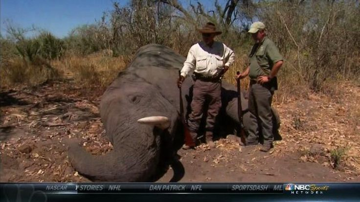 NBC Sports Host Who Shoots Elephants Compares Critics To Hitler Sign the PETITION TO GET THIS PROGRAM OFF THE AIR.  IT HAS NOTHING TO DO WITH 'SPORTS'!