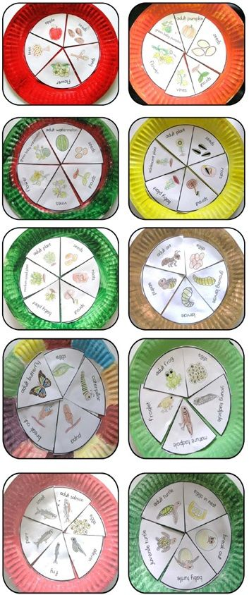 Paper Plate Life Cycles, Frog, Pumpkin, Apple, Sunflower, Plant, Ant, Butterfly, Watermelon Salmon and Sea Turtle that you can paste onto painted paper plates. >>> A total of 10 life cycle (I will be adding more).$