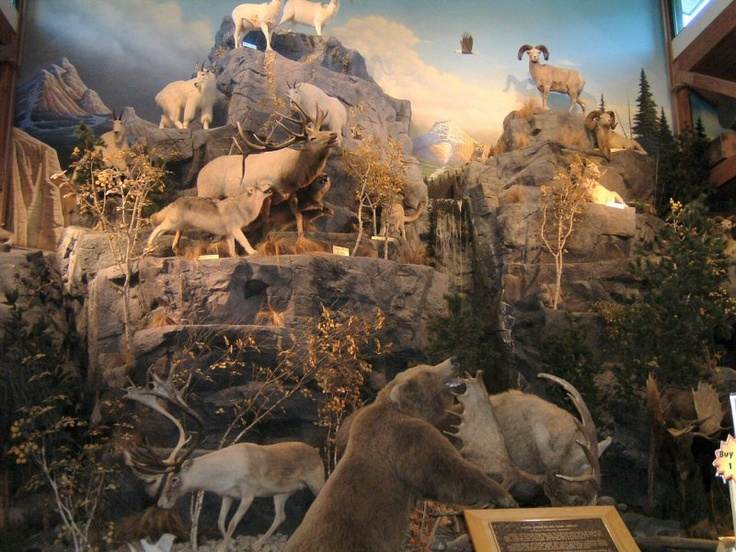 Cabelas new level taxidermy taxidermy pinterest in for Cabela s tackle craft catalog