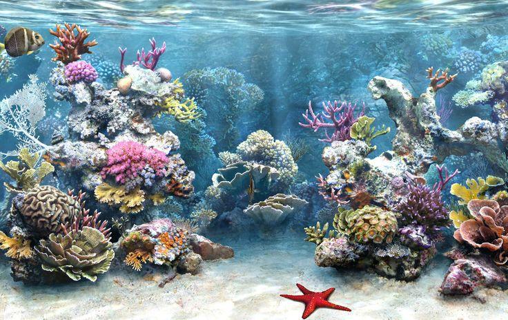 Under The Sea Backdrop | http://simaquarium.com/SimAQUARIUM/sa-T5.jpg
