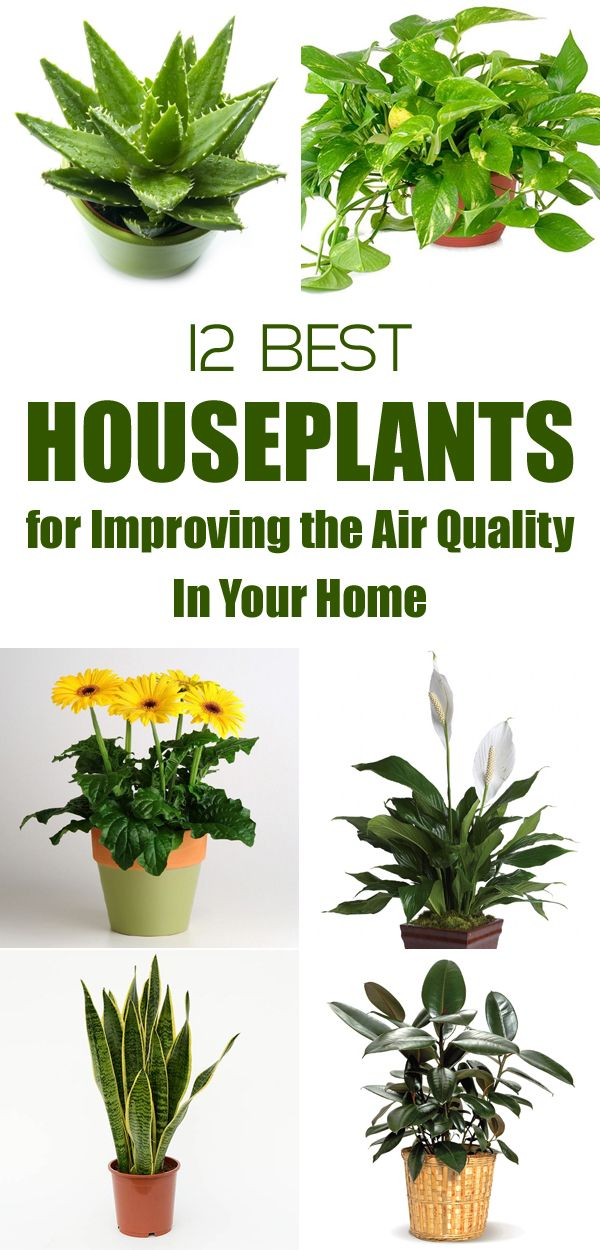 81 best new apartment images on pinterest bedroom ideas for Best plants to improve air quality