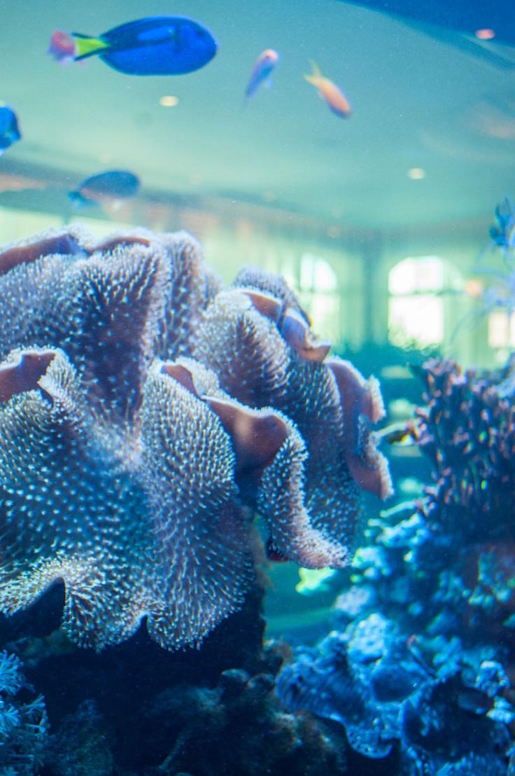 1000 Images About Aquariums On Pinterest Sharks