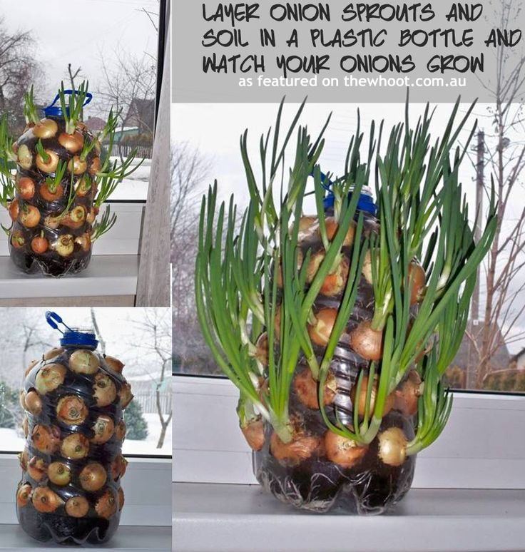 17 best images about gardening indoors on pinterest for Indoor gardening onions