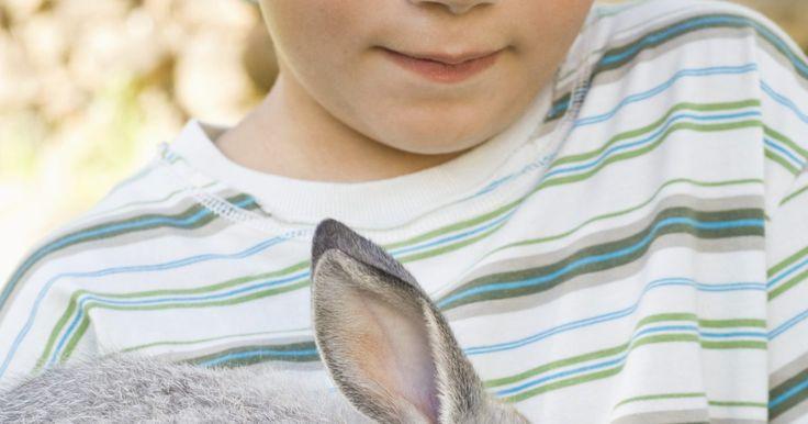 Cómo criar a un conejo enano dentro de una casa. En tiempos pasados, los conejos han sido etiquetados como animales domésticos al aire libre, las nuevas prácticas en el cuidado de conejos han cambiado esta actitud. Ellos ya no son considerados animales salvajes, indomables, son mascotas domésticas inteligentes y adiestrables muy parecidos a un gato o un perro. Los conejos enanos son la raza ...