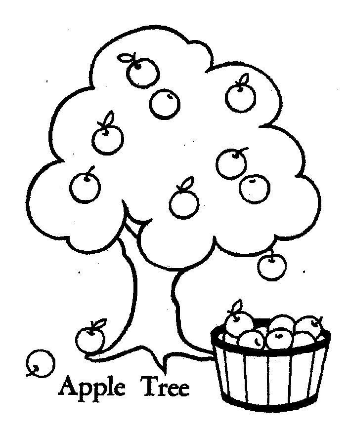 apple tree coloring page - 8 best plant coloring pages images on pinterest apple