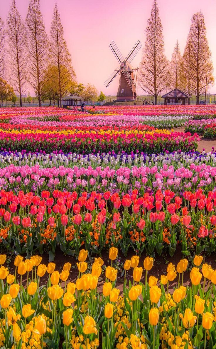 Flower Gardening One Of The Best Occupation It Is Also The Natural Beauty Which Beauty Flower Beautiful Gardens Beautiful Landscapes Beautiful Nature