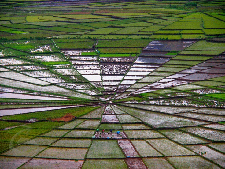 Spiderweb rice terrace Cancar Village, Cara, Ruteng, Flores Island, Indonesia. Photo by: Makarios Soekojo
