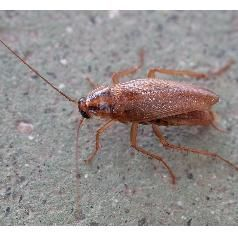 How to get rid of a major German cockroach infestation - written for those unfortunate enough to need this info: http://www.infobarrel.com/Getting_Rid_of_German_Cockroaches_One_of_the_Worst_Pests_on_Earth