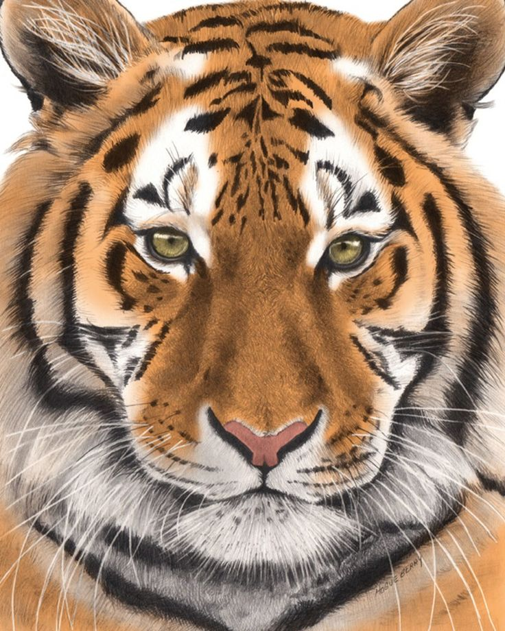 A Jungle Of Big Cat Designs: Tiger, Nature, Wall Art, Print, Jungle Cat, Big Cat