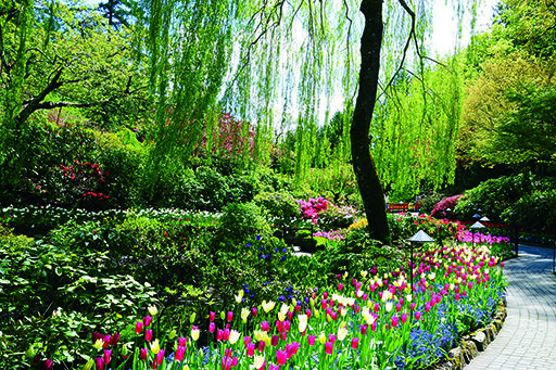 The Butchart Gardens in the spring. #explorevictoria #spring #victoriabc #butchartgardens #yyjevents