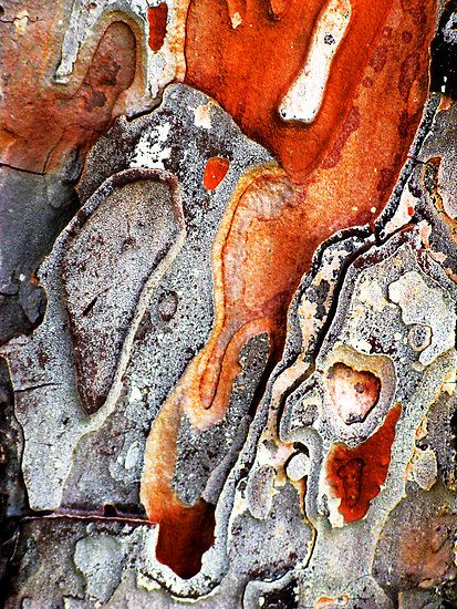 Macro from Tree Bark – Abstract from Nature.By Marilyn Harris