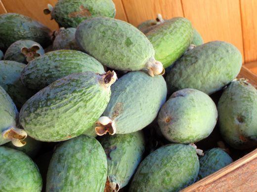 forbidden fruits is a potato a fruit or vegetable