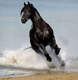 Happy horse... kind of art...