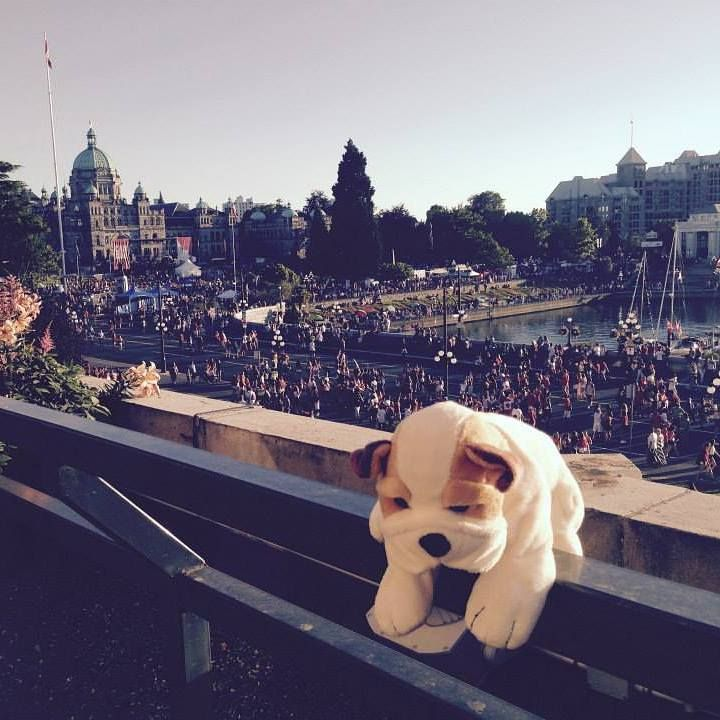 A Canadian Hotel Returned Someone's Lost Stuffed Animal In The Most adorable way.