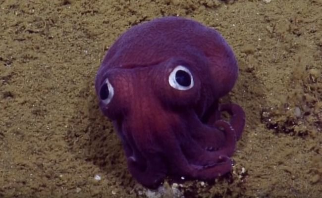 Everybody Loves This Purple Googly-Eyed Stubby Squid - so cute!