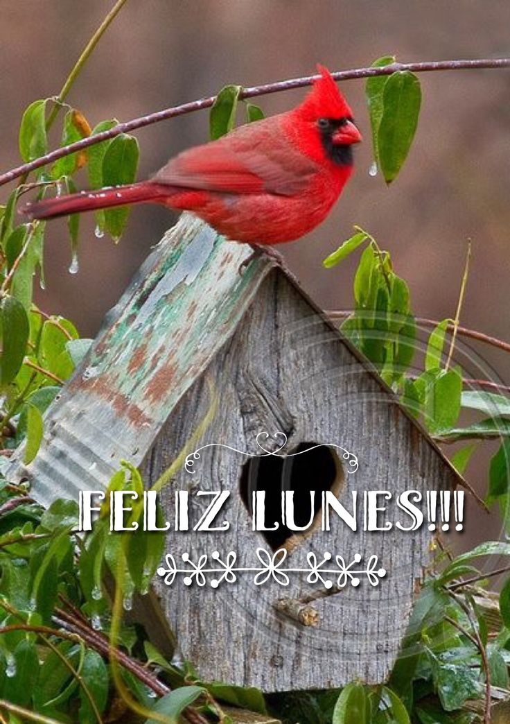 Feliz inicio de Semana / Feliz Lunes / Feliz Semana / Feliz Día / Lunes / Monday / Happy Monday / Happy Day / Que pases un lindo día / Buenos Días / Good Morning / Inicio de Semana /  Happy Week / Bendiciones