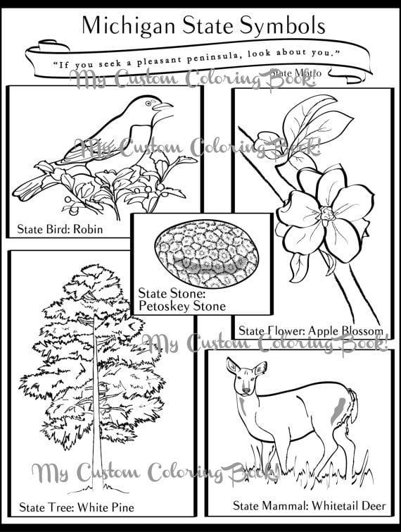 michigan state flower coloring pages  state symbols