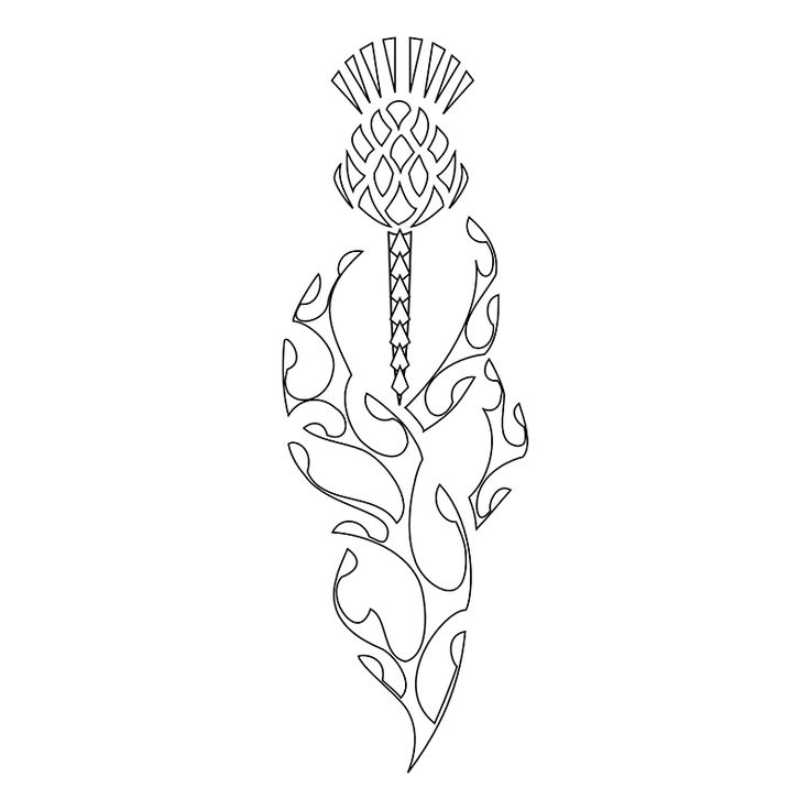 Scottish Thistle Symbol | for over white background scottish thistle symbol pretty much of mark ...