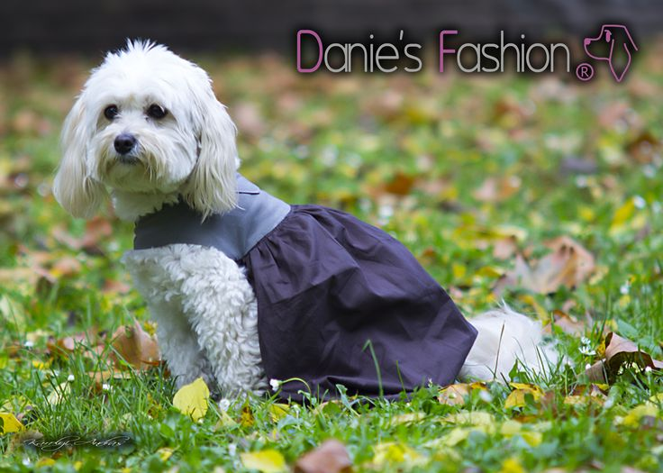 Dog dress http://daniesfashion.com/