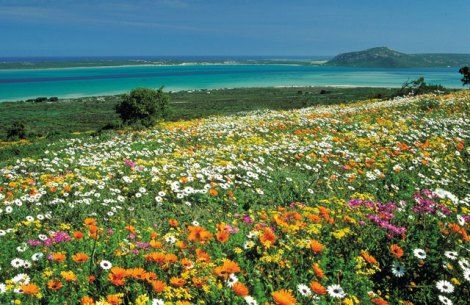 Cape Floral Region Protected Areas, Eastern Cape