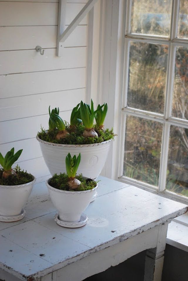 foxontherun:  (via Forced Bulbs: A Primer : Remodelista)
