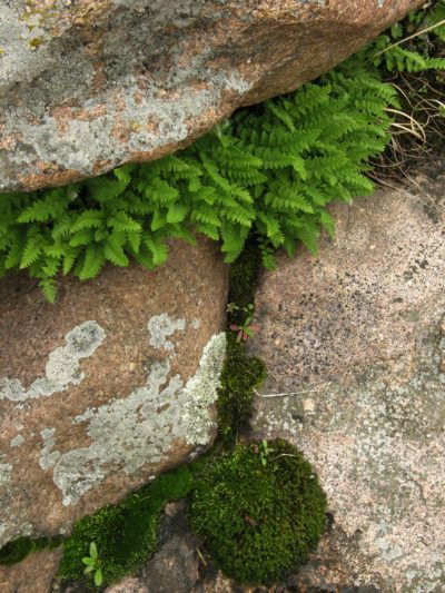 Planting In Crevices: Are There Plants For Cracks And Crevices - Not all landscapes come with perfect soft, loamy soil and gardening in cracks and crevices may be a part of your garden reality. Fortunately, there are many plants that are versatile enough for rocky spaces. Click here for some great options.