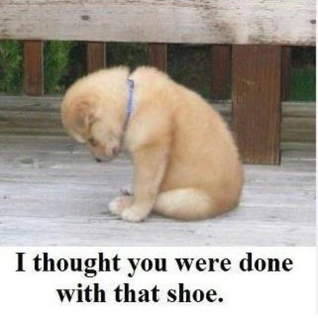 Aaaawwweee, cheer up puppy ☀