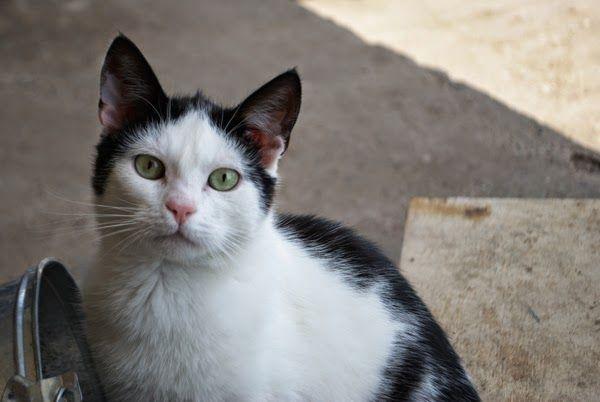 Paulina Kozak fotografia: cats