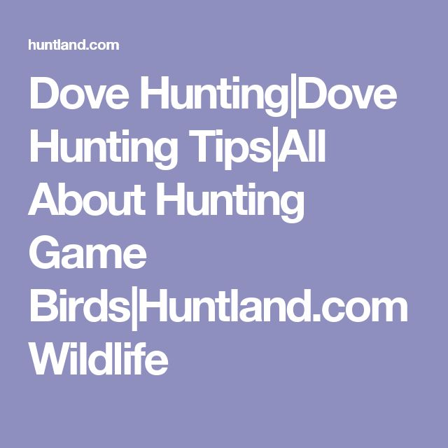 Dove Hunting|Dove Hunting Tips|All About Hunting Game Birds|Huntland.com Wildlife