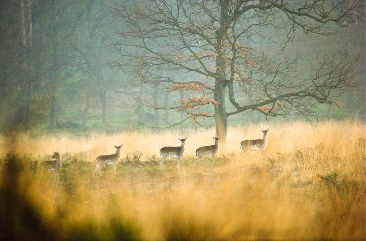 Nationaal park de Hoge Veluwe, Netherlands