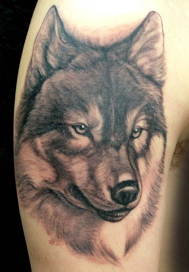 Wolf tattoo by lorenzo evil machines roma italia ink for Tattoos of wolves
