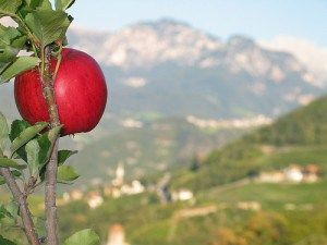 What are Swiss Apple Stem Cells And What Can They Do For The Skin ? - Naturally Healthy Kyani