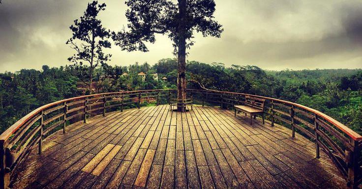 Luwak Coffee with great view . . . . . . . . #luwak #ubud #ubudbali #kopi #kopiluwak