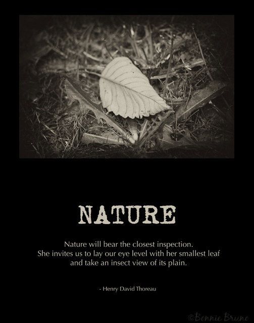 Fine Art Nature Poster  11x14 Photo Art Print  by BonnieBruno