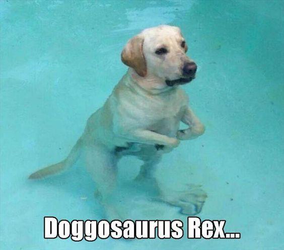 Doggosaurus Rex - Funny Labrador Dog