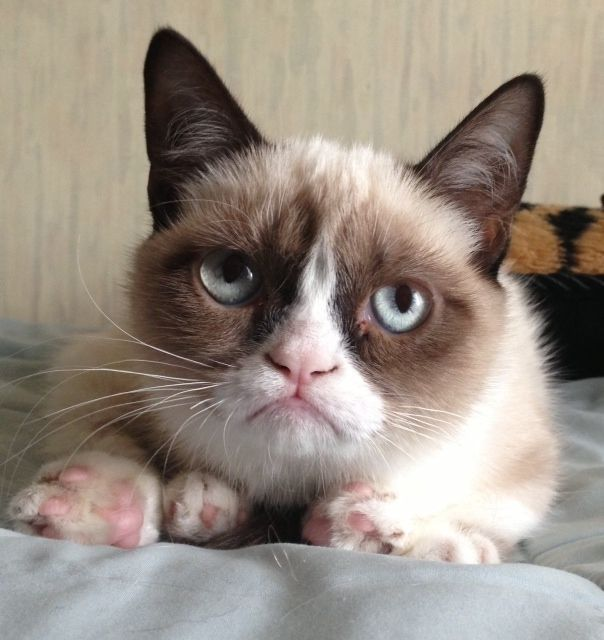 SMOOSHED FACE CAT