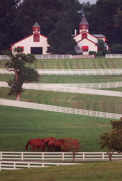 Calumet Farm's white fences and red-trimmed barns have made it a landmark in Lexington.